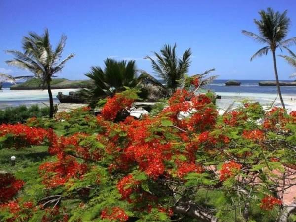 Offerta vacanze Insieme Watamu